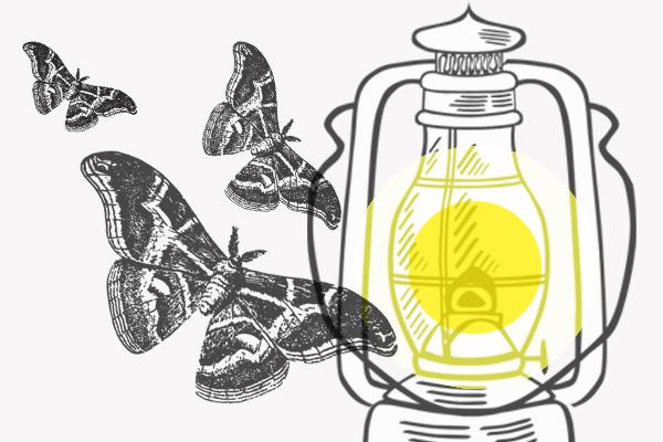 Warum Fliegen Insekten Ins Licht Kribbelbunt